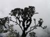 Peru_Inka_day3_tree.jpg
