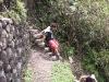 Peru_Inka_day4_machupicchu_wainya_climp.jpg