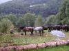 Frankrig_ridning_hestene.jpg