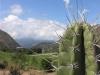 Venezuela_maracaibo_cactus.JPG